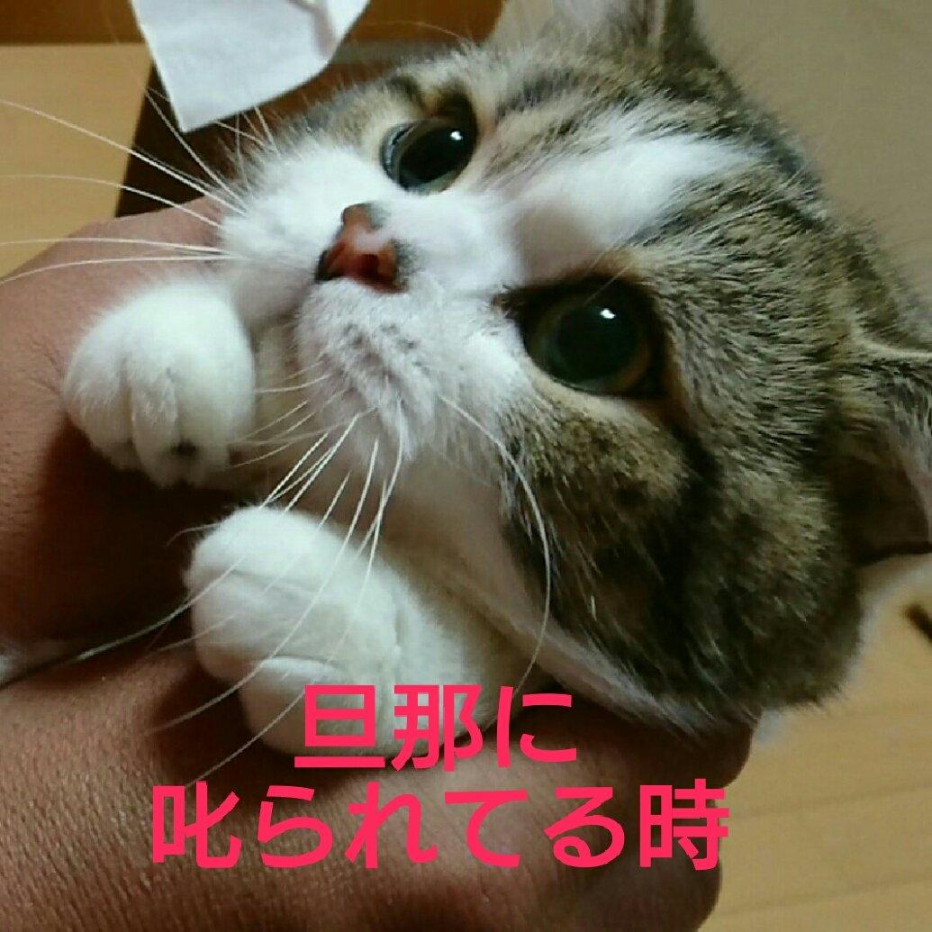 最近、本当によく思うんです…。 猫様も愛嬌で許される相手と、そうでない相手をよく見てるなぁと… そし…