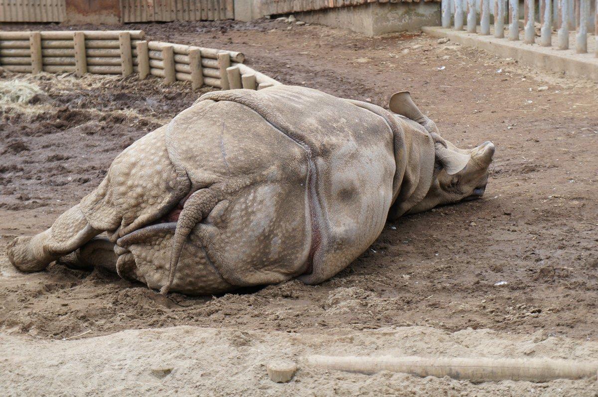 多摩 動物 公園 サイ