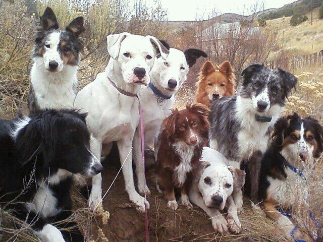 Team Dog Rescue