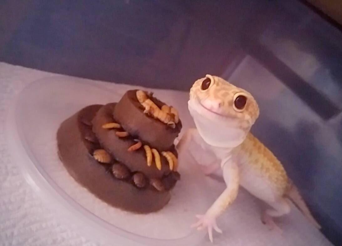 Открытки с рептилиями, днем рождения