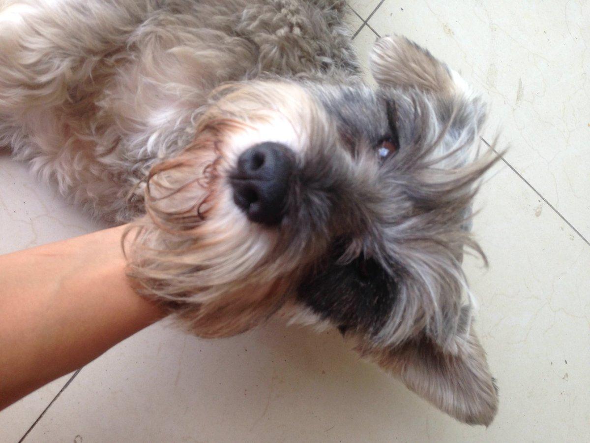 Amigos, alguien quiere adoptar a Jack? Su dueño ya no apareció. Es un amor de perrito pero ya tengo 4! ☹️ https://t.co/kwdEq5odkN