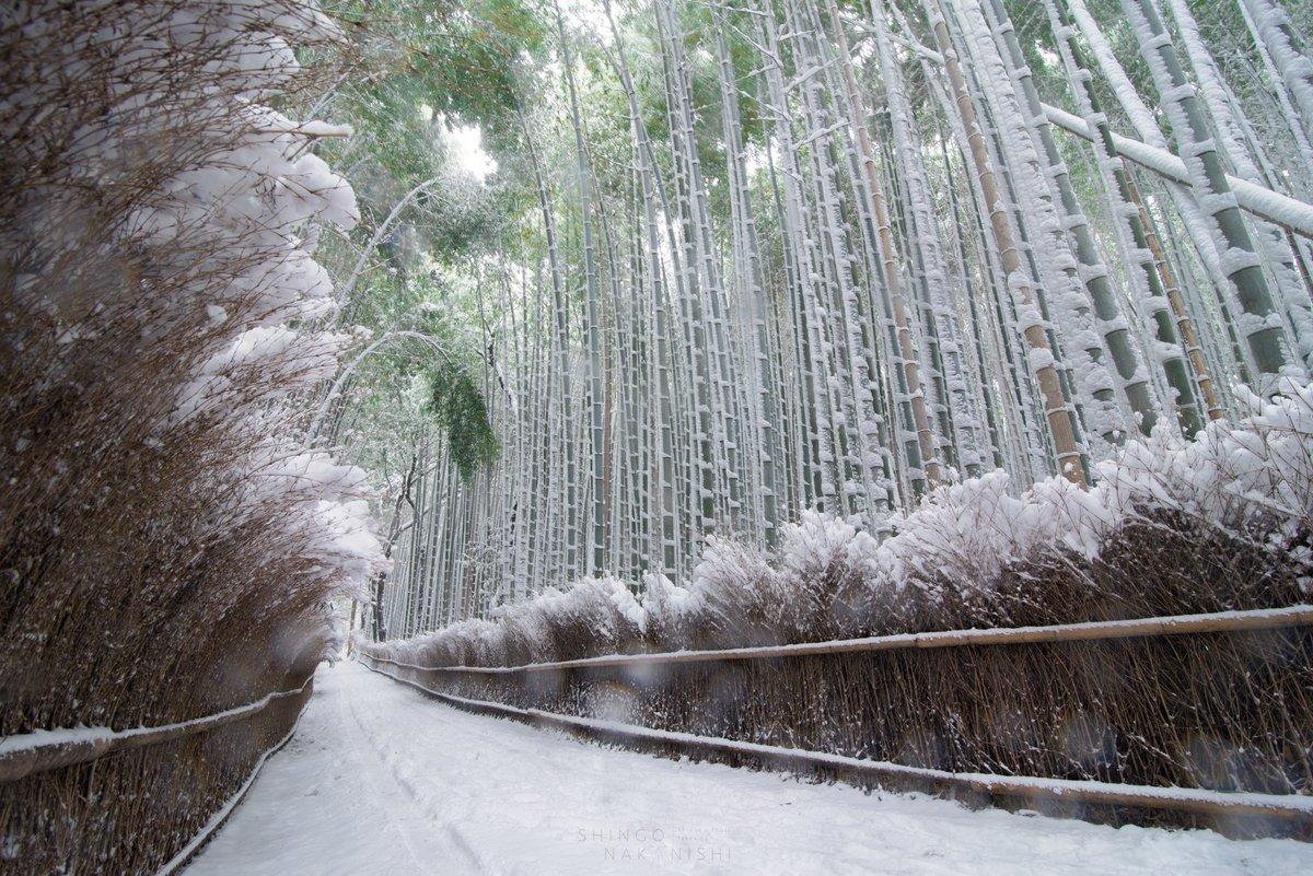 утверждают, что японский лес зимой фото часто путешествует