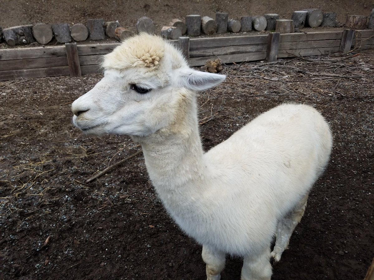 .&quot;@winamp, it really whips the #llama&#39;s ass.&quot; &lt;-- if you know how this phrase is spoken, you have pioneered #digitalmusic! <br>http://pic.twitter.com/EpQTqRxfFv &ndash; à Sonoma TrainTown Railroad