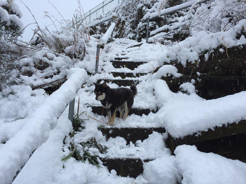 おはようございます、今朝は今シーズン一番の雪です❗️ 朝から通学路の雪かきです。道路も雪がありますので注意して下さい。#十津川https://t.co/g8WVh1F7Me https://t.co/BCx7yCGGif