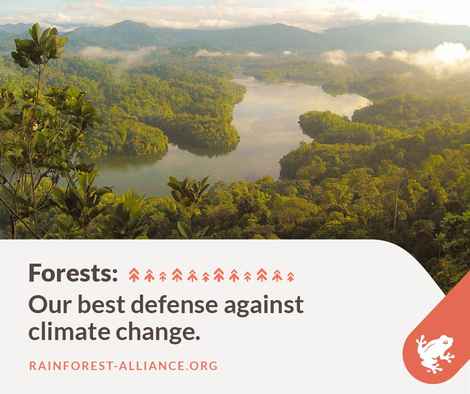 It&#39;s estimated #forests absorb 2.6 billion tons of CO2 per year, about 1/3 of the carbon dioxide released from the burning of #fossilfuels.<br>http://pic.twitter.com/X5EolJFdNP