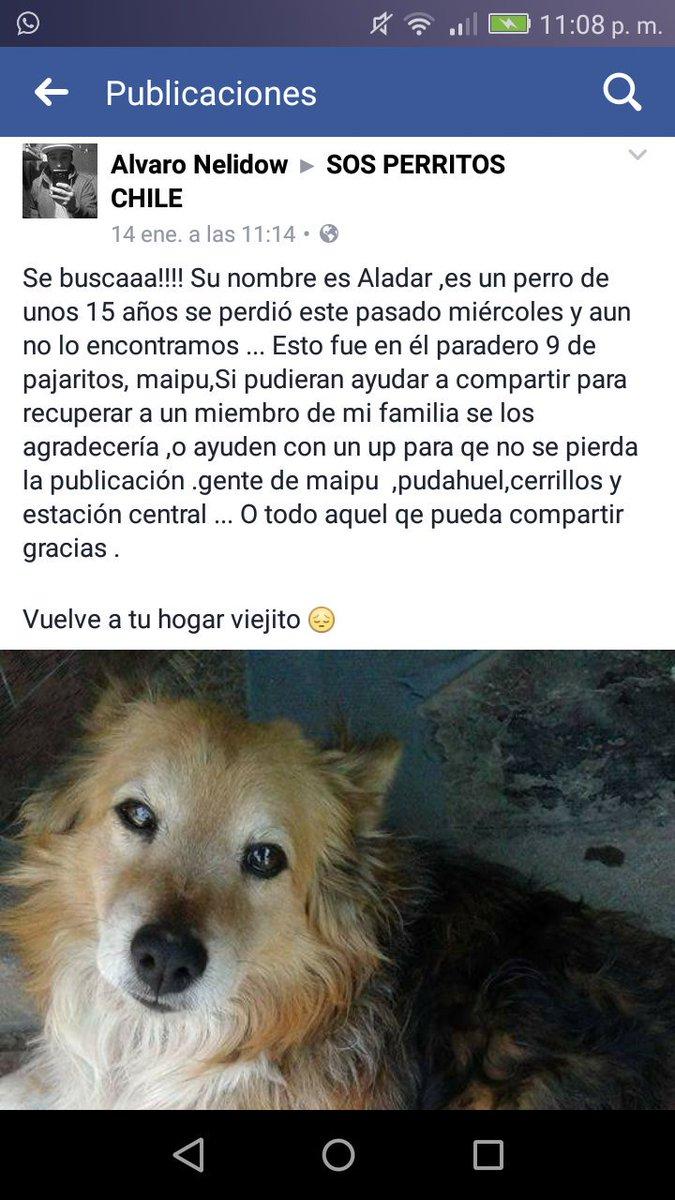 Su nombre es #ALADAR se perdió en #Maipu es viejito @XimenaAG70 @bartorell @Laurys_x @patrmarsh @carolinapinoc @Hogar_moka @PerrosPerdidos<br>http://pic.twitter.com/PClzGWrrOT