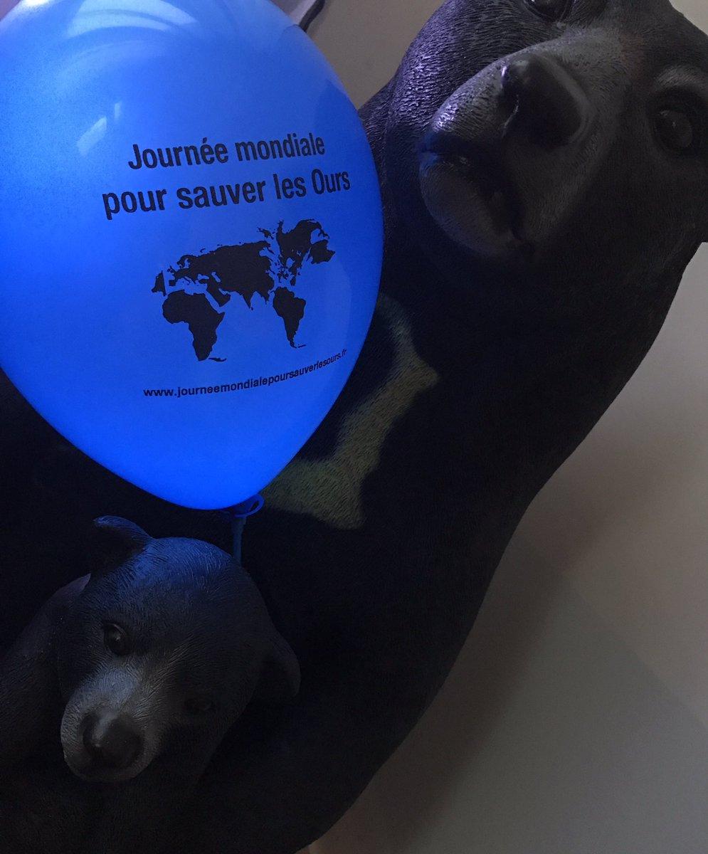 On a reçu les ballons qui orneront le stand de la Journée mondiale pour sauver les #ours.  http://www. journeemondialepoursauverlesours.fr  &nbsp;  <br>http://pic.twitter.com/QtXyAZqL6e