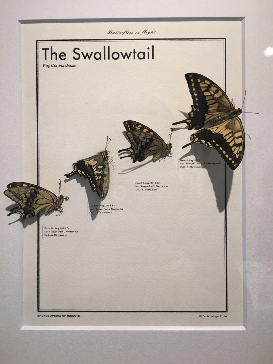 松本章さんの昆虫標本デザイン展に行ってきました。 超センスいい!普通の標本とは違って、ケースの中に独特の世界観を構築するようにデザインされてて、標本の新しい境地が見えました。お話もさせていただきましたが、前職が同じ会社でしたw https://t.co/05HSxSfrtA