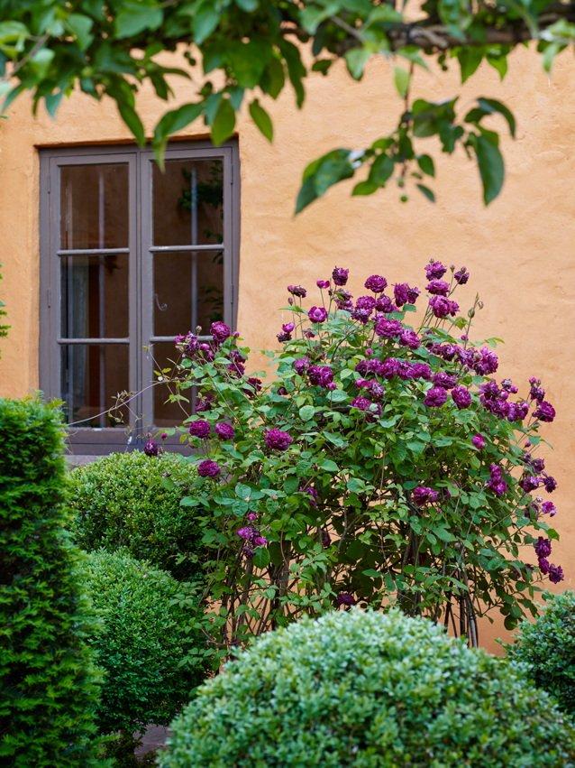 Arne Maynard Garden Design On Twitter We Have A Few Places Left