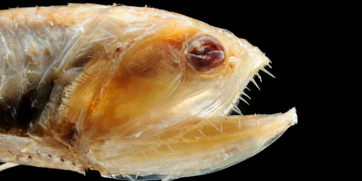 The abundance of fish in the deep sea could feed the world for How many fish are in the world