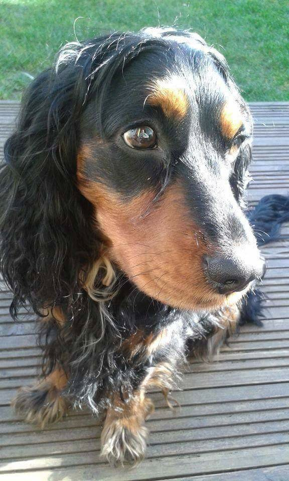 Can you help find Luckie after he escaped from a @dfds_uk ferry last month? https://t.co/DOOLjEITrZ https://t.co/i0k5aPWgqa