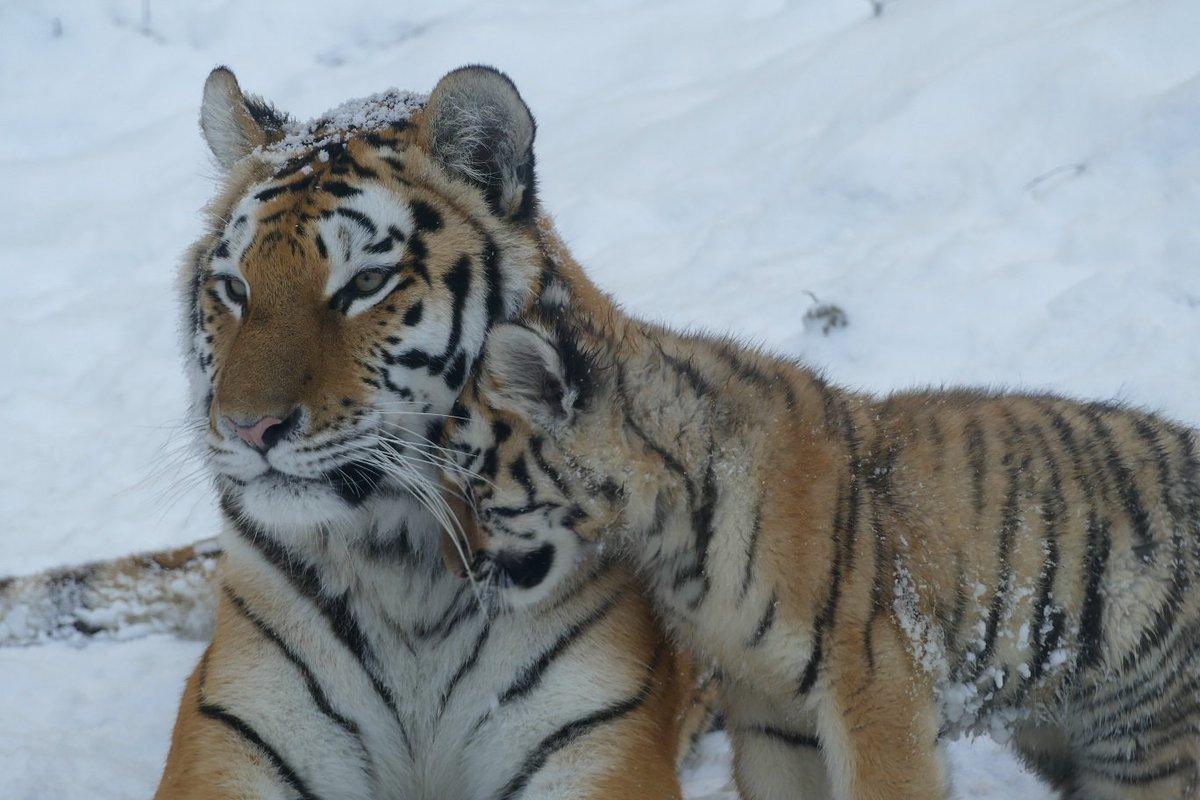 Pas de #blueMonday en ce #snowday pour les animaux du Muséum de #Besancon ;-) Belle semaine à tous :-D #neige #snow #SnowSunBesancon<br>http://pic.twitter.com/N0ivJAZFae