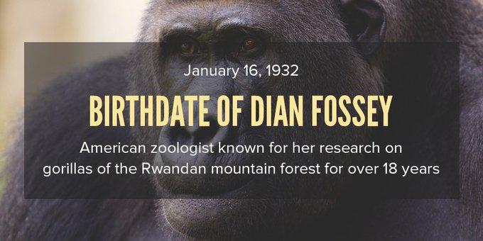 "Thermosci \""Happy Birthday Dian Fossey!"