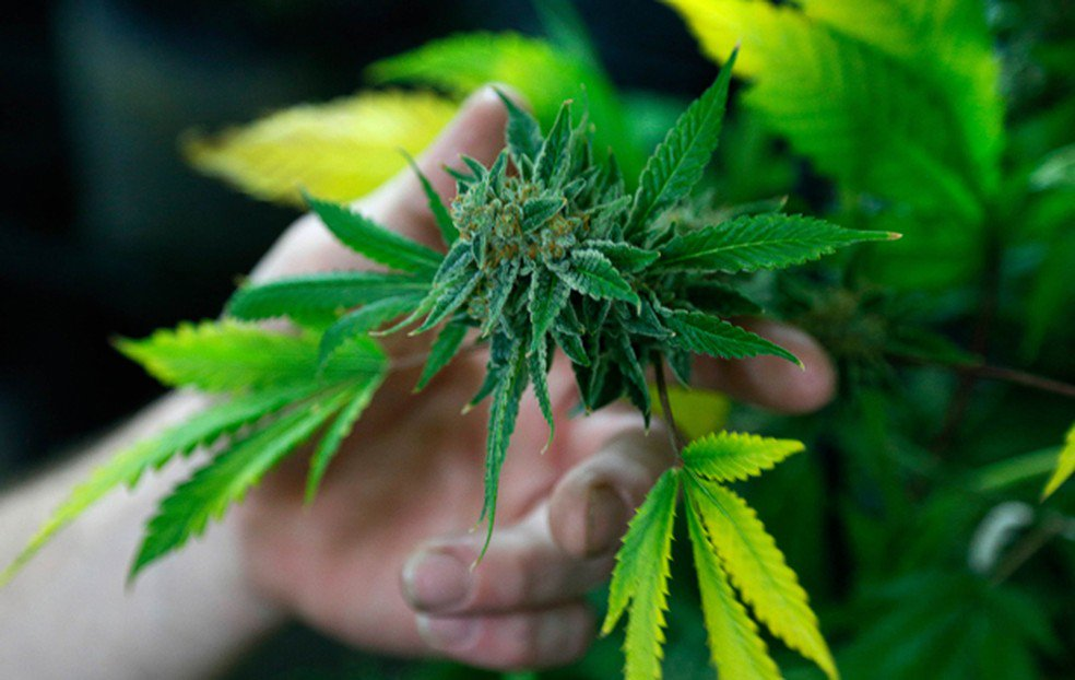Anvisa aprova registro de remédio à base de Cannabis pela 1ª vez no Brasil https://t.co/Im9HmicKnx #G1