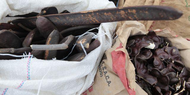 Misión Árbol rinde homenaje a Robert Serra con recolección de semillas en todo el país