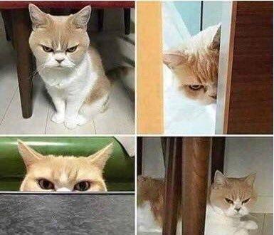 - Cara sei arrabbiata? - No amore -  htt...