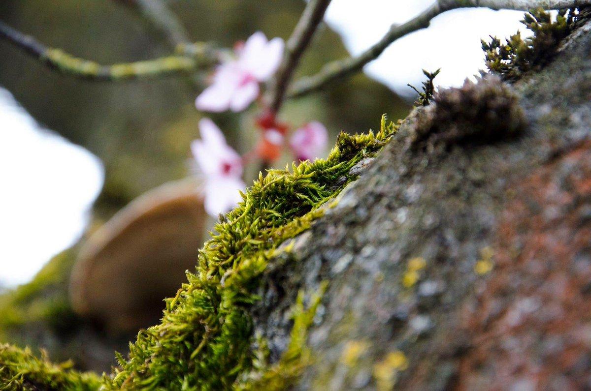 &quot; Laine d&#39;arbre &quot; #vert #rose #flou #fleur #mousse #mousses #outdoors #followme #nikonbelgium #nikoneurope #belgium #brussels #arbre<br>http://pic.twitter.com/4o17aqUixf