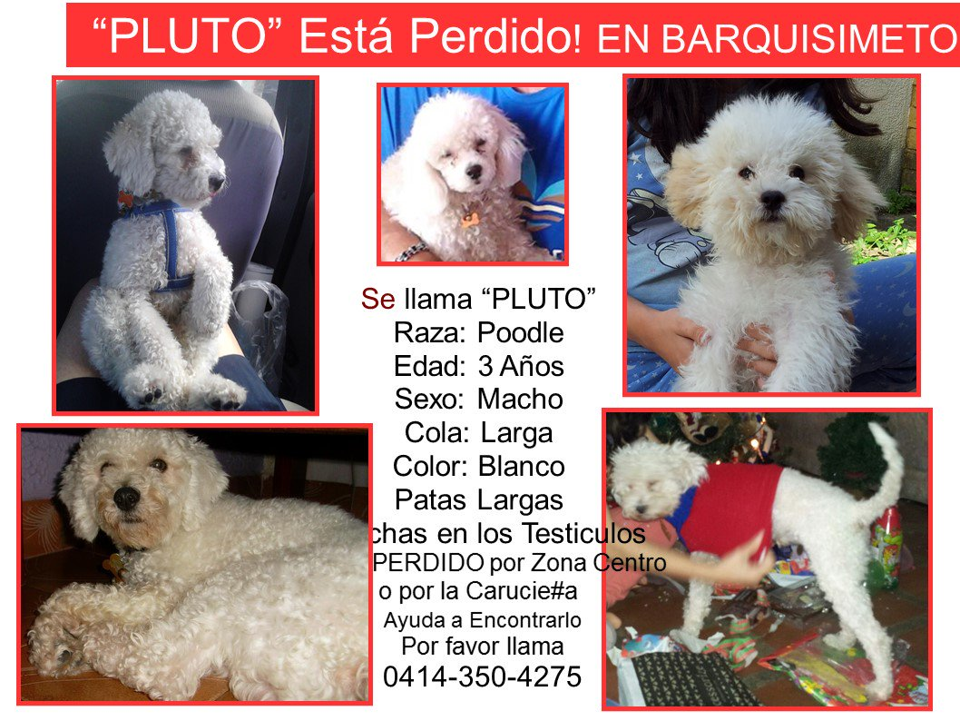 #SeBusca RT @lollyhc: RT por favor #Pluto Perdido en Barquisimeto RT @bhernaarias: Esa es la Foto de PLUTO<br>http://pic.twitter.com/kq8e8MTY6W