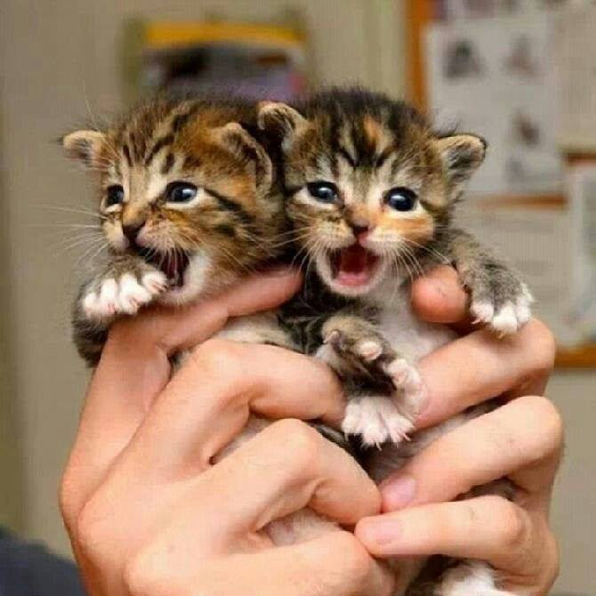 Cats And Kittens On Twitter Awwww Kittens Click Here Https T Co Wmeei3qyp2 For All The Best Cat Pix