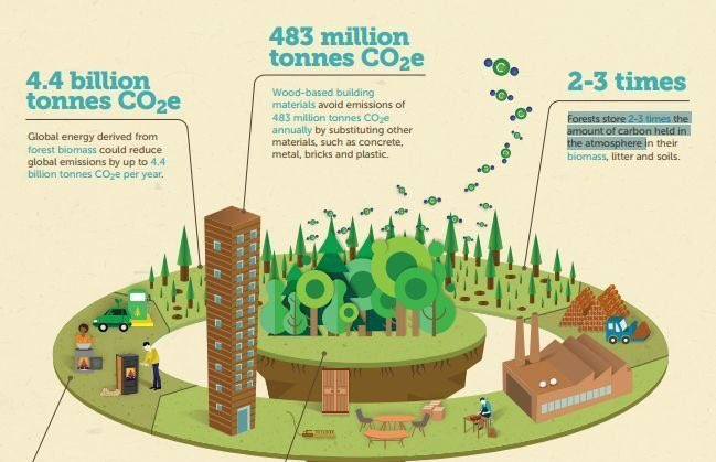 Did you know?: #Forests store 2-3 times the amount of carbon held in the atmosphere  http:// bit.ly/2iu19ly  &nbsp;   Via @FAOKnowledge<br>http://pic.twitter.com/1d2w7ysNGl