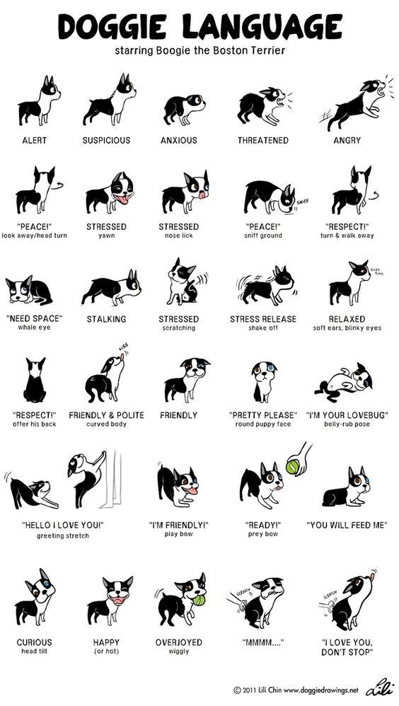 Doggie Language  #dogs #doglanguage   https://www. buzzfeed.com/burnred/doggie -language-281t &nbsp; … <br>http://pic.twitter.com/BET73E5tTF