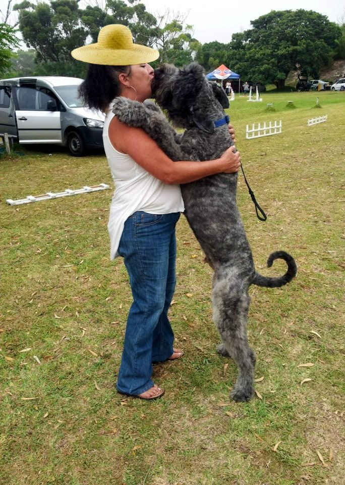 A Bouvier Kiss #dogs #pets #rescue #adopt #donate #fund<br>http://pic.twitter.com/xvhYaW7u3x