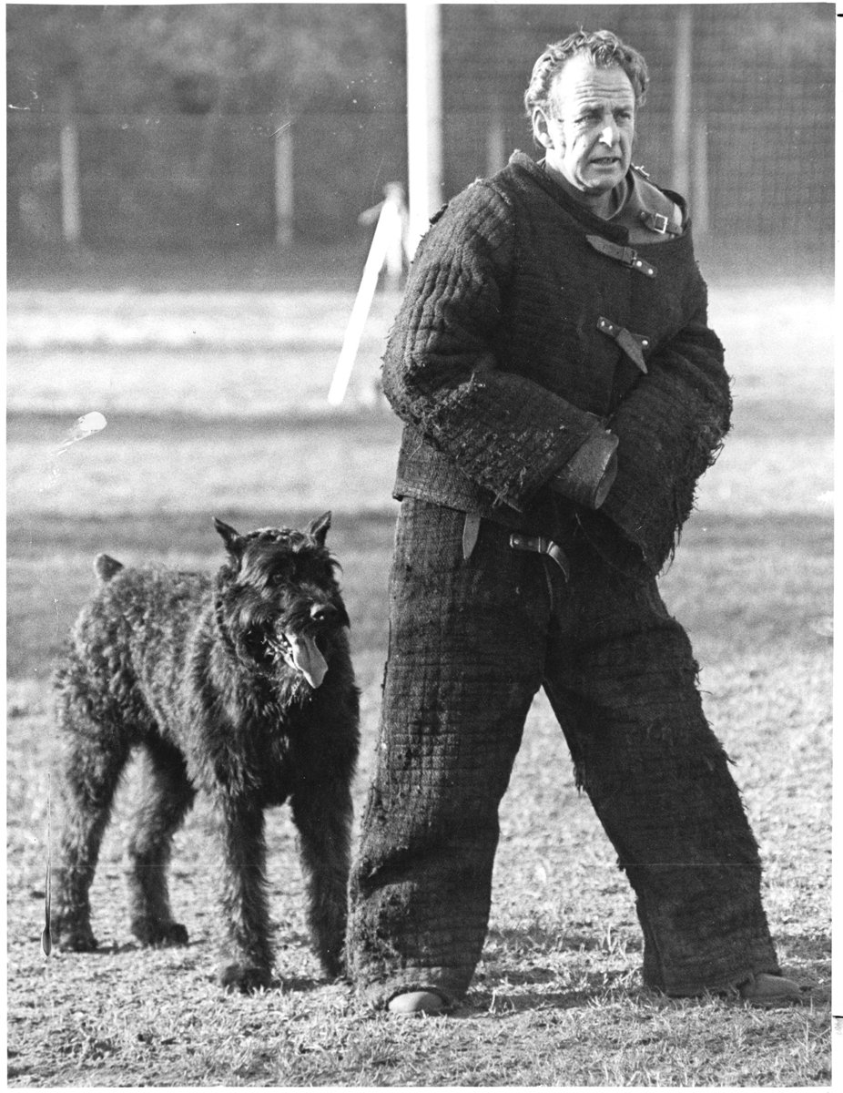 Bouvier Sport Dog #pets #sportdogs #dogs #rescue #donate #fund<br>http://pic.twitter.com/LplBphFurm