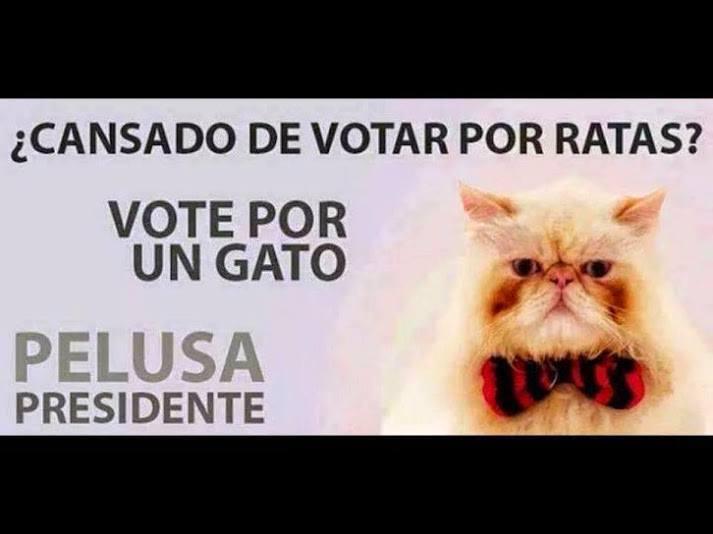Mi voto seguro para #Pelusa para erradicar las ratas de la política en EC <br>http://pic.twitter.com/hwRF422UF2
