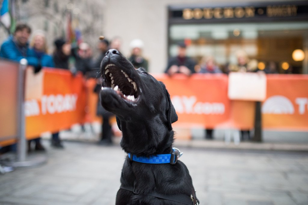 Rawrrrr, it feels like Monday! #TODAYPuppy