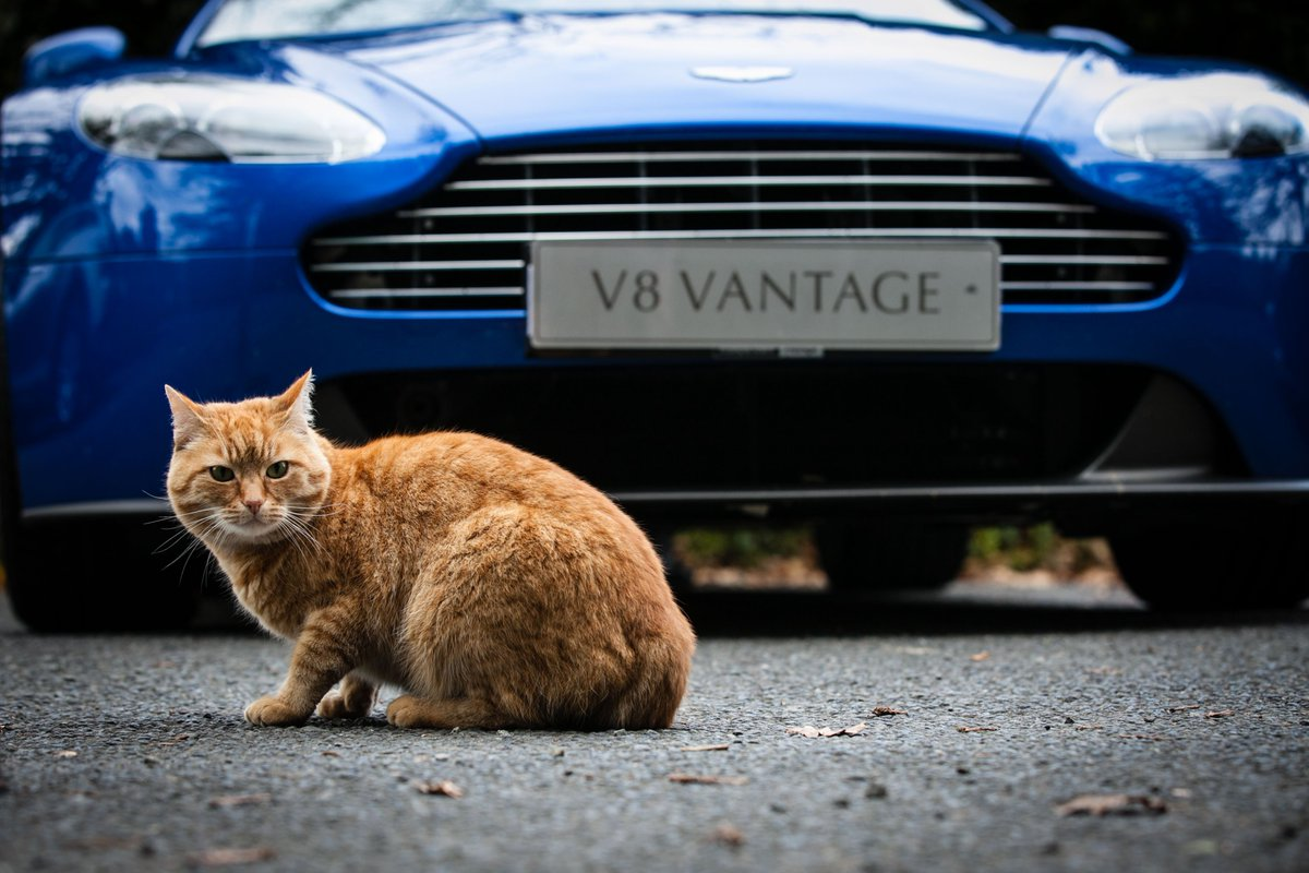 Our feline neighbours love Aston Martin! We\'ll see if we can catch another glimpse of the elusive black cat...