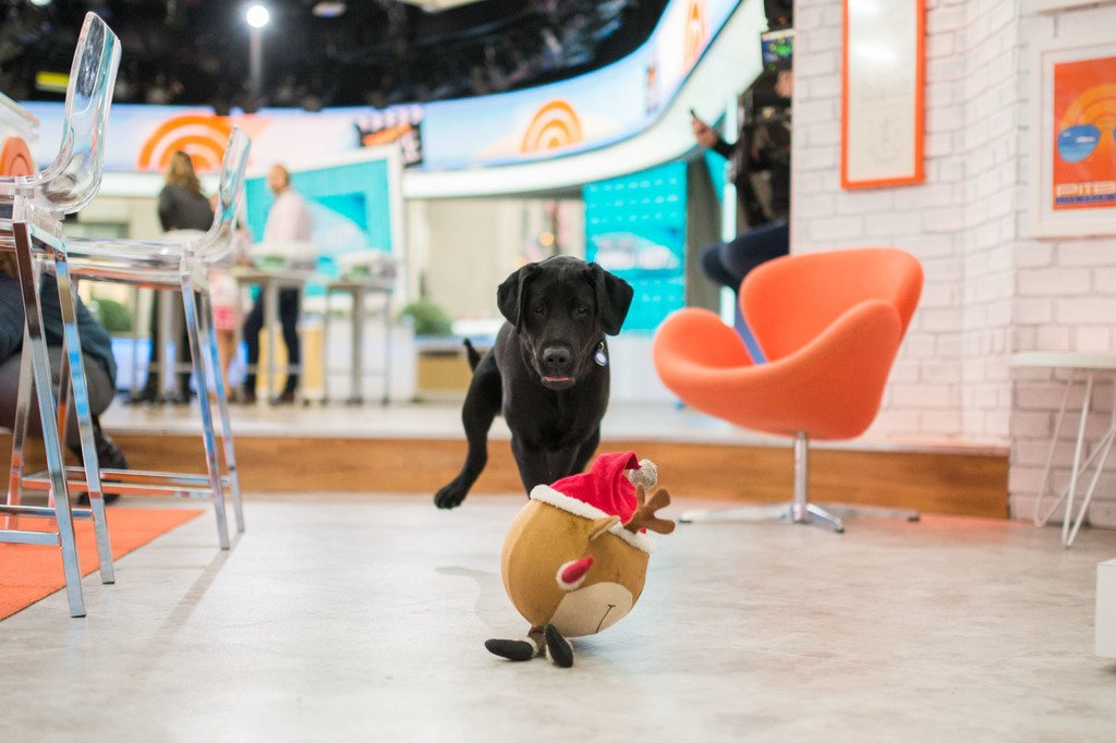 Must. get. toy. #TODAYPuppy
