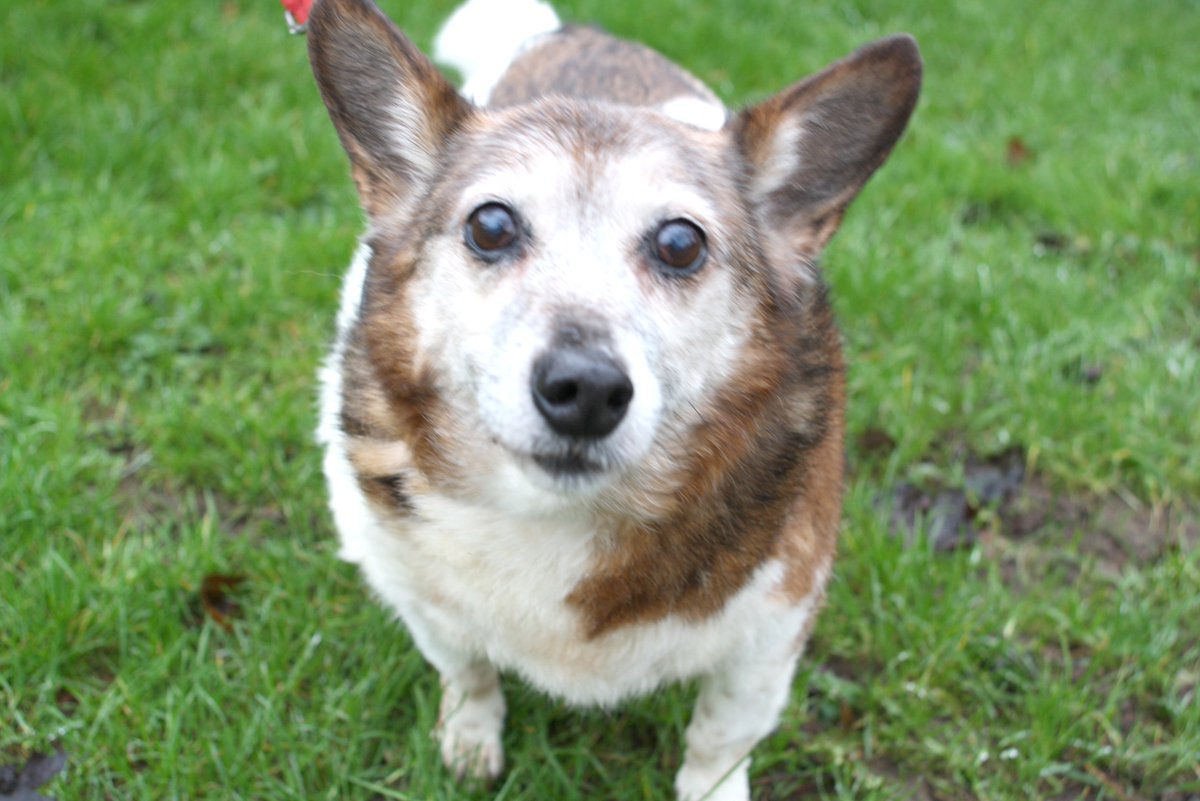 NEW IN: Barney, older chap looking for a home with plenty of company.  https://t.co/18LnZTZ7I1 https://t.co/AdBGP7MBH7