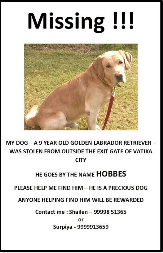 HELP find #dog stolen from #gurugram outside home, thief pushed,roughed up #senior citizen, snatched Hobbbes. #Lawless  @gurgaonpolice RT<br>http://pic.twitter.com/tL75QEqvj9