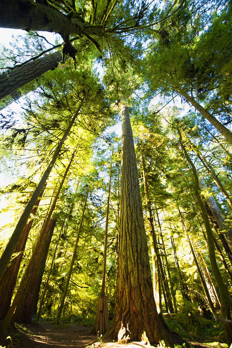 Protecting #forests: It's the right thing to do, and we can do it —  http:// ow.ly/Oap63085wwG  &nbsp;   via @HuffingtonPost<br>http://pic.twitter.com/DlErQqwxh7