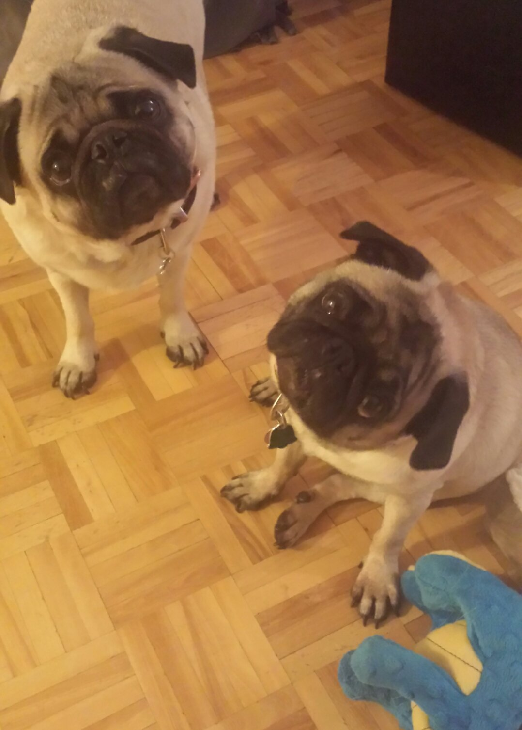 Stacey & the Tarot Pugs here. Having Twitter problems so we might be behind. #TarotRap https://t.co/kxfuDp1ZUs