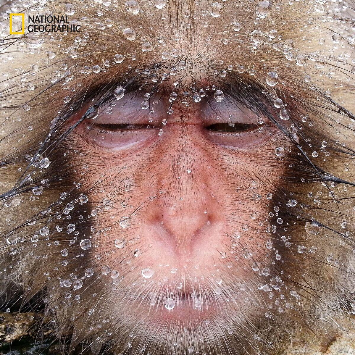 #Wikileaks et E. #Snowden crie victoire pour #chelseamanning . Un singe en hiver... Ca change grâce à #POTUS . @RaineyReitman @HBibard<br>http://pic.twitter.com/uHNjqjjC6w
