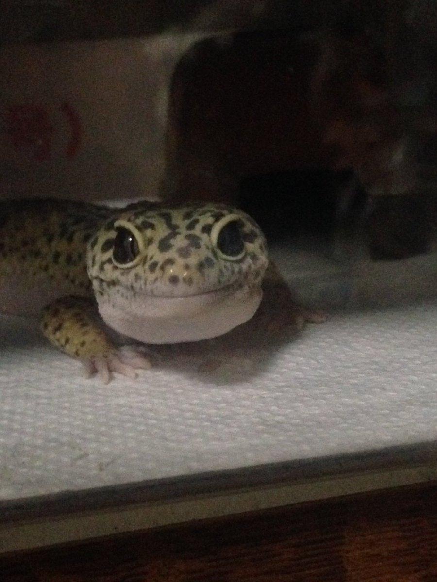 爬虫類を飼い始めてから「爬虫類のようないやらしい、冷たい目」という形容が使えなくなった。こういう( …