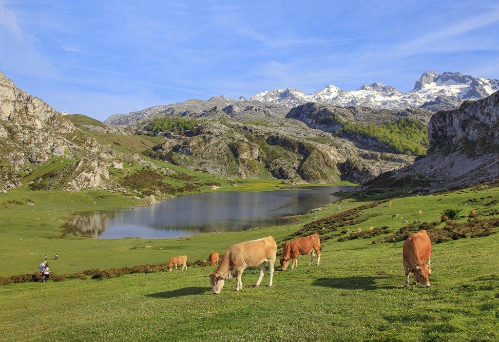 Buenos Días, Good Morning, Bonjour, Guten Morgen, доброе утро, Buongiorno from #Asturias @fitur_madrid #LagosdeCovadonga #PicosdeEuropa <br>http://pic.twitter.com/VOyOlxBUwo