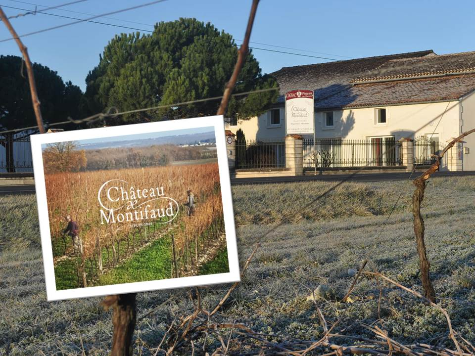#Taille dans notre vignoble #Pruning Grape vines der #Rebschnitt #chateaumontifaud #montifaud #châteaudemontifaud #cognac #grower<br>http://pic.twitter.com/C67lVpv4P3
