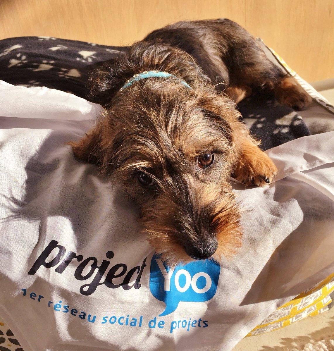 Aujourd&#39;hui, on a une invitée un peu spéciale au bureau... On vous présente notre petite Margotte  #puppy  #dogs #startup<br>http://pic.twitter.com/qDlEB8qgiB