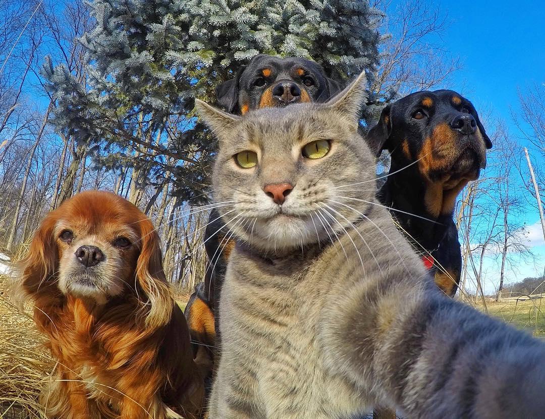 グループ 自撮り。