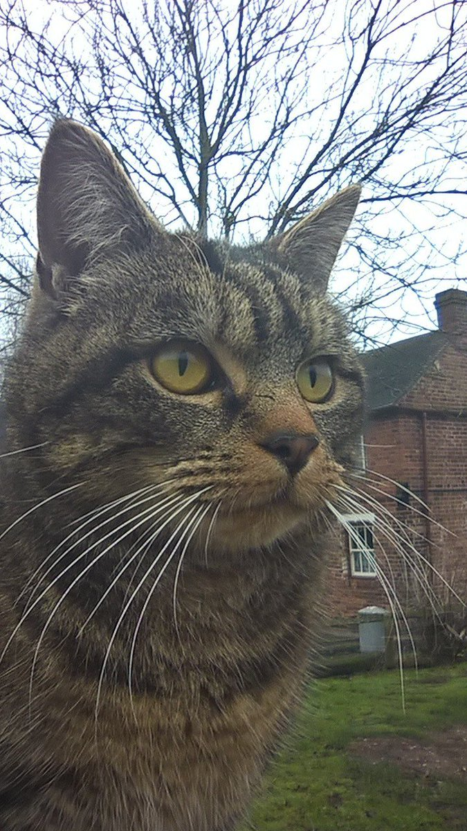 Simba one of our village resident cat\'s wanted to contribute to #MuseumSelfieDay2017 with her own #museumselfie