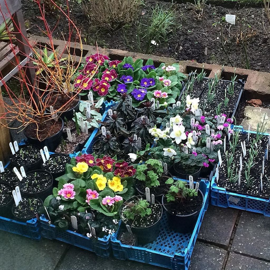 Hardy plant society hardyplantsoc twitter for Hardy plants for the garden