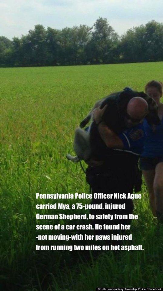 Police officer with a heart of gold carries an injured 75lb. German Shepherd to safety!  #dogs #pets #animals #dogsoftwitter<br>http://pic.twitter.com/BMJ4vZz4nw