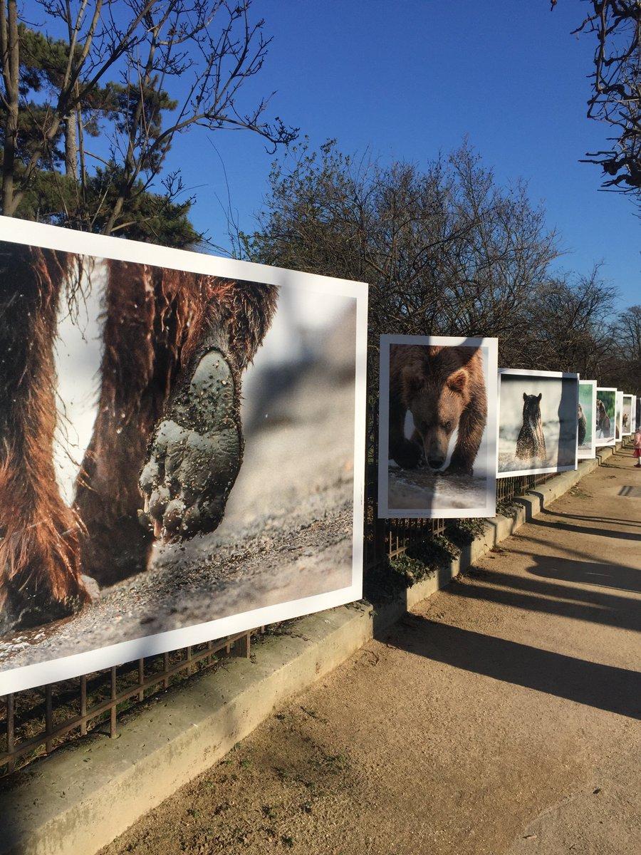 Vous aimez les #Ours découvrez l&#39;exposition photos de Vincent Munier au jardin des plantes. Un pure délice ! <br>http://pic.twitter.com/8xblbP0aIi