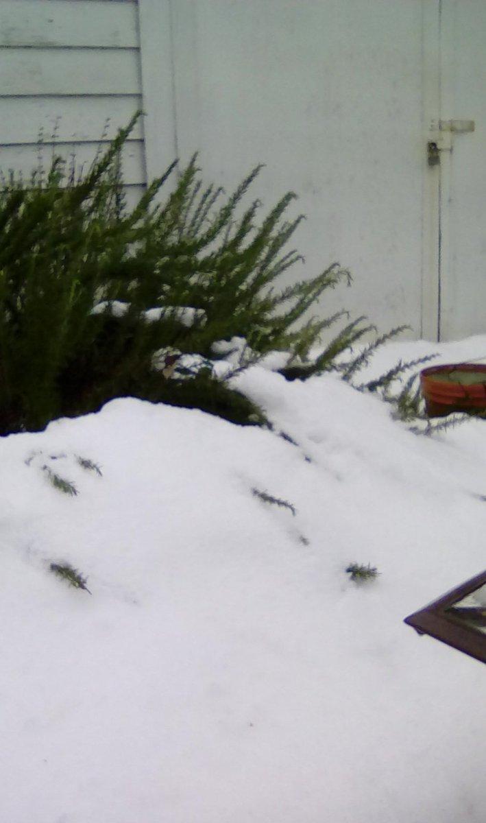 Day 7: The Thaw... I&#39;m gonna miss you snow!  #PDXSnowpocalypse #pdxsnow #PortlandSnow #winterstorm2017 #portland<br>http://pic.twitter.com/HVOuQ0Z7C8