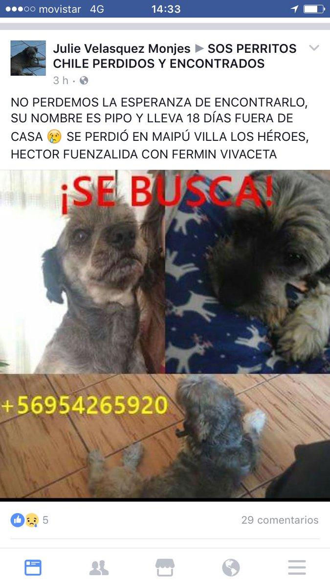 Su flia lo busca #maipu @bartorell @carolinapinoc @CarolinaDiAz_ @patrmarsh @F_GarrasyPatas @Animalperdidocl rt<br>http://pic.twitter.com/kXzdtenVIp