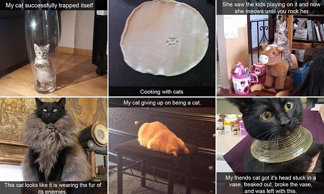 Daily Mail Online On Twitter Owners Capture Moments Their Cats Are