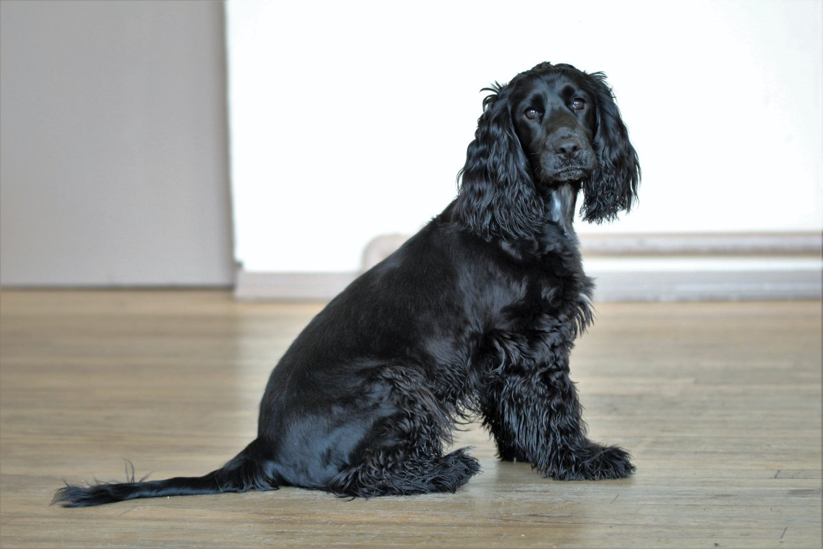 Happy 1st birthday to the lovely @HearingDogs Fern, and all of her F litter siblings!