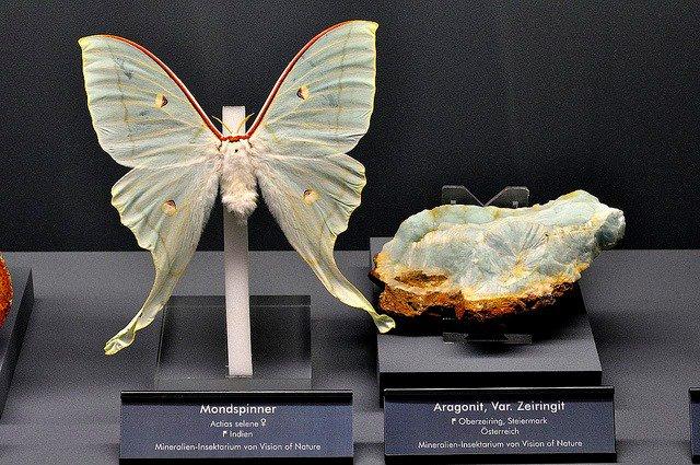 ドイツの「Terra mineralia Museum」ってトコで昆虫と同じ色彩の鉱石を並べて展示し…